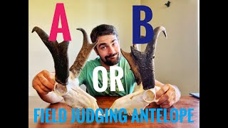 How to Score an Antelope: Field Judging Tips