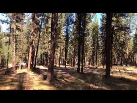 Grayback Gulch Campground Overview