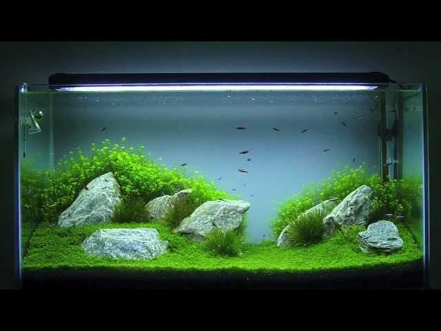 Aquascaping - Aquário Plantado 200 Litros HD