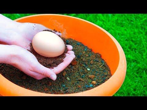 Enterre um ovo em seu jardim e veja o que acontece!