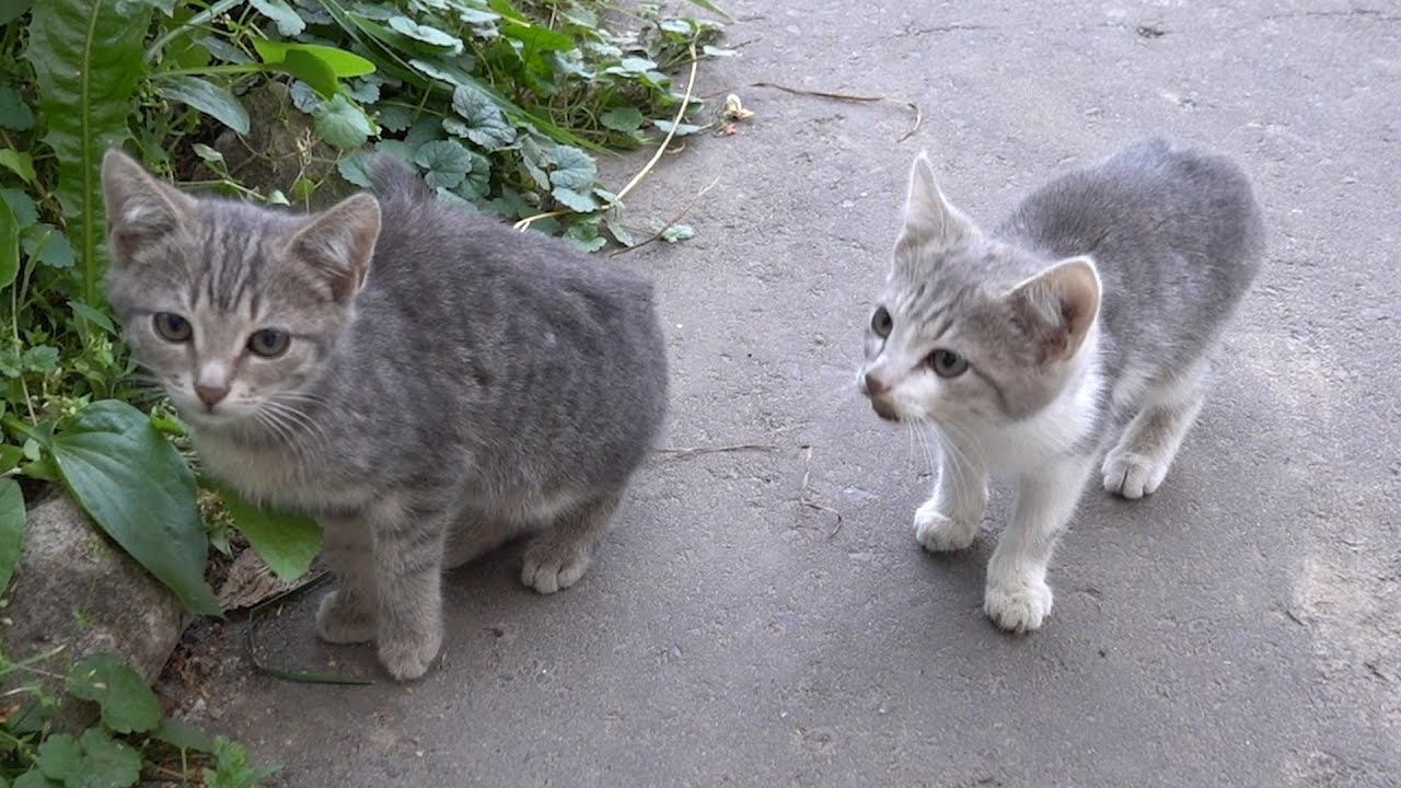 New two hungry kittens are afraid of me