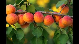 Enchanted Fruit Garden// Food Forest//Live Fruit