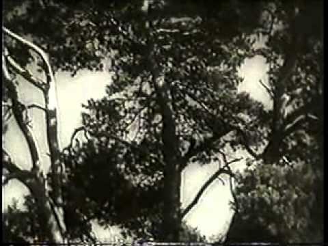 Wyrok życia (1933)