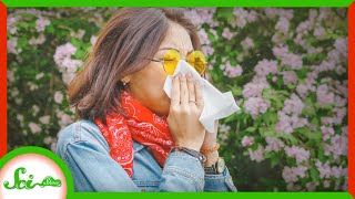 Thank Climate Change for the Awful Allergy Season