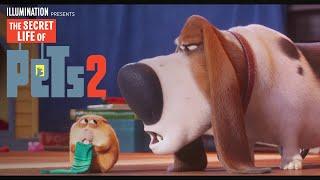 The Secret Life Of Pets 2   Now on 4K, Blu-ray, DVD & Digital   Illumination