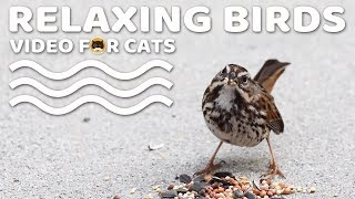 Relaxing Bird Video for Cats to Watch.
