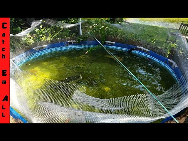 HOME POOL POND How to Build and GROW GIANT FISH: Tutorial and Feeding!