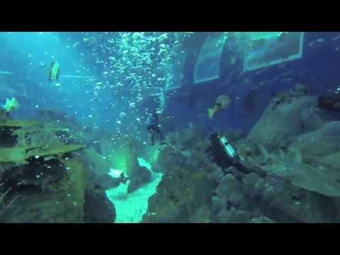 Open Ocean Dive at the S.E.A. Aquarium,  RWS
