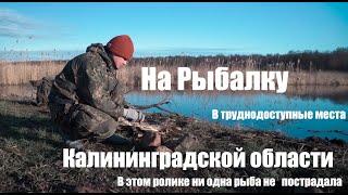 Ограничения рыбалки в калининградской области