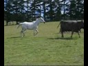 Download My Horse, Dog and Girl with Beautiful Turkish Music HD Mp4 3GP Video and MP3