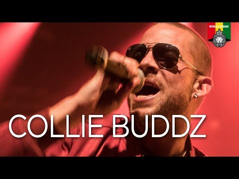 Mp3 Download Control Collie Buddz — BEE MP3