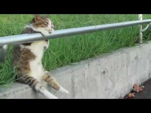 Cat sitting relaxed (видео)