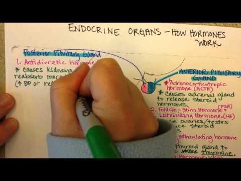 Behandlung von Diabetes oralen Antidiabetika