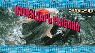 Когда клюет рыба по лунному календарю на 2020