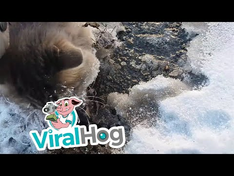 Frozen Kitty Gets Second Chance