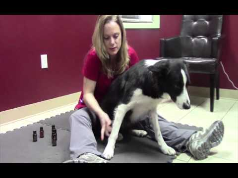 Using Essential Oils on dogs