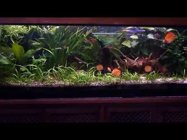 Planted Discus Aquarium set up - 400L