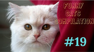 Funny cats compilation #19 /2019/