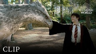 Meet Buckbeak | Harry Potter and the Prisoner of the Azkaban