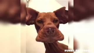 Лучшая подборка приколов про животных. Funny animals. До слез. #смешныеживотные #funnyanimals