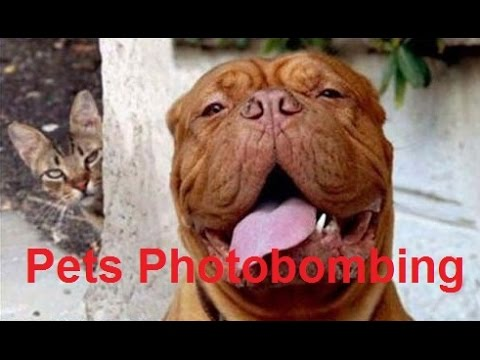 Funny Photobombing Pets (Cats/Dogs Photobom Compilation) - DDOF