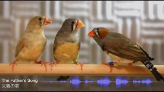 Talented birds sing songs that their fathers have taught them
