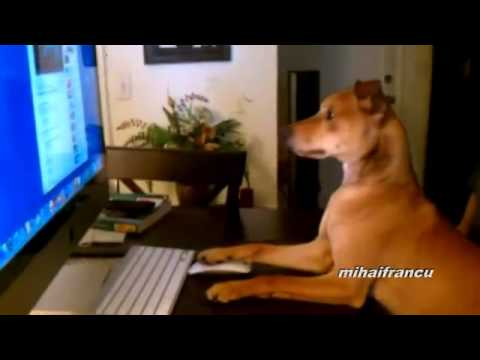 Estos Perros Sí Que Saben Actuar Como Humanos...