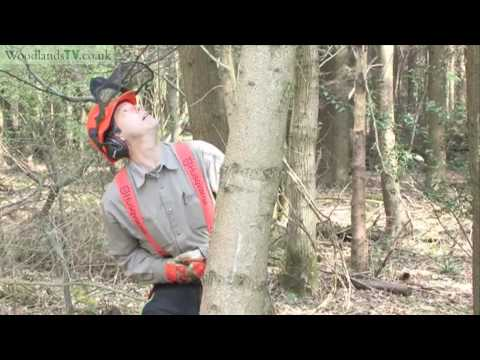Felling a hung up tree - safety first