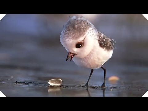 PIPER - Disney Pixar Short (Animation Teaser - 2016)