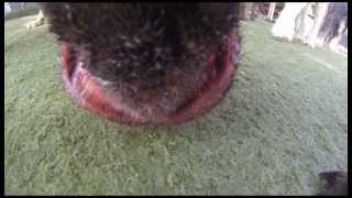 Dog's Eye View - August 8, 2013