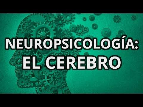 La Neuropsicología - El cerebro
