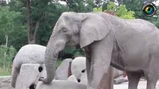 Zoo Basel Largest/Best Zoo In Switzerland Tierpark Basel