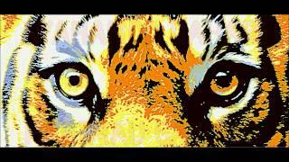 preview picture of video 'harimau gayong   gerik perak'