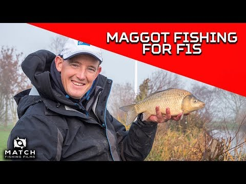 Lee Kerry's Maggot Fishing Tips – F1s and silverfish