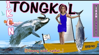 ERIN BCX - IKAN TONGKOL - Official Lyrics Video
