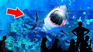 Why No Aquarium In The World Has A Great White Shark