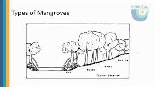 The Importance of Mangroves