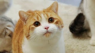 [Cat Live] Move house with my four cats: A stranger place becomes a paradise to cats
