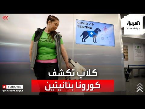 العرب اليوم - شاهد: الكلاب تكتشف مصابي كورونا في ثانيتين