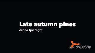 DJI FPV Drone flight - Late autumn pines