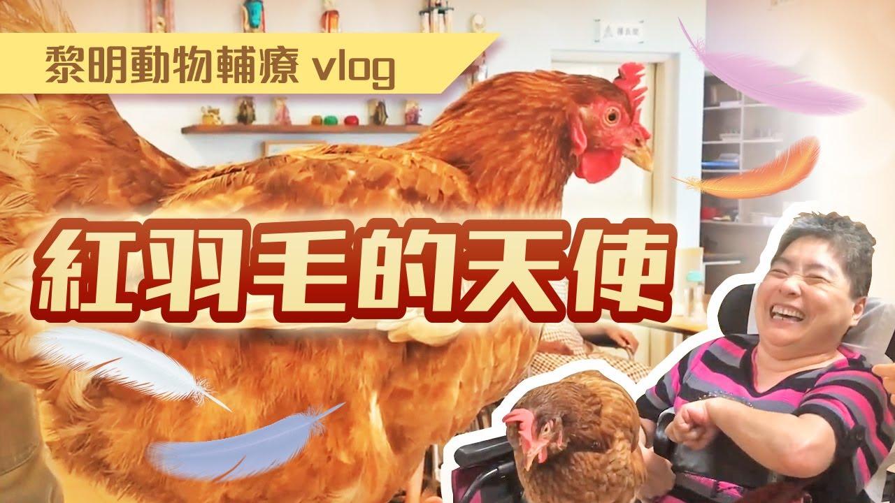 動物輔療Vol 2:紅羽毛的天使
