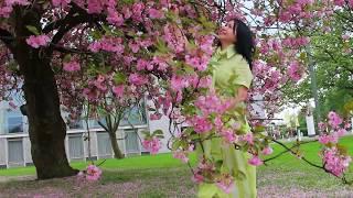 Mùa hoa  anh đào - Ngọc lan