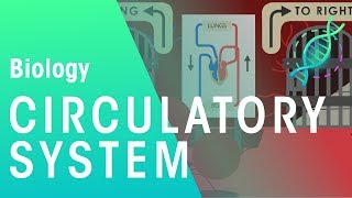 Intro to the Circulatory System | Biology | Physiology | FuseSchool