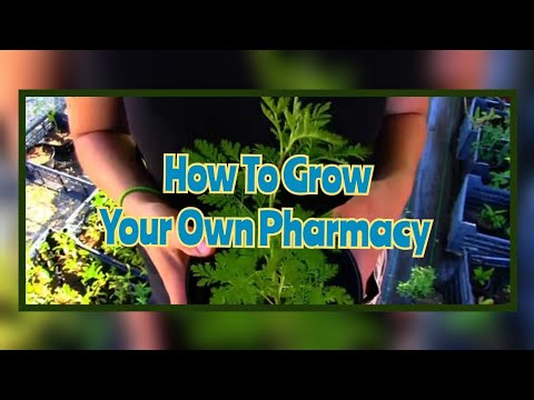 Video Grow Your Own Pharmacy -  An Introduction To Medicinal Plants