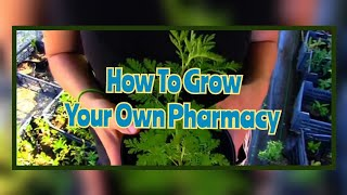 Grow Your Own Pharmacy -  An Introduction To Medicinal Plants