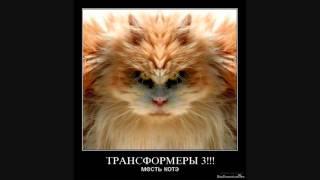 смешные фотографии кошек  /  демотиваторы про котэ