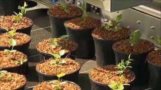Как выращивают голубику в Нидерландах