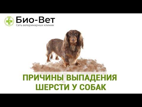 У Собаки Выпадает Шерсть 🐕// Причины и Что Делать // Сеть Ветклиник Био-Вет