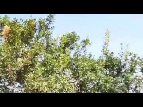مروحية تابعة للاحتلال تقوم بنقل المصابين في عملية تفجير العبوة الناسفة غرب رام الله SD