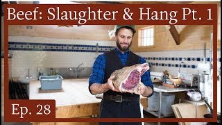 A Meatsmith Harvest Ep  28: Raising, Slaughter And Hanging Of Beef, Part 1